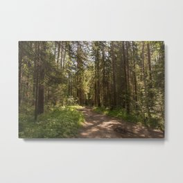 Path to the pine forest Metal Print