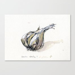 garlic study #1 Canvas Print