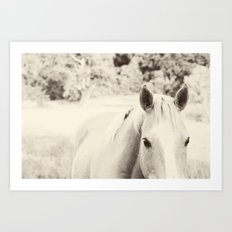 Black and White Palomino Art Print