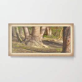 Long Shadows in an Enchanted Madrona Forest Metal Print