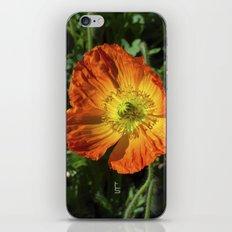 Orange Poppy II iPhone & iPod Skin