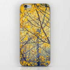 trees IX iPhone & iPod Skin