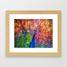 Rainbow Peacock Framed Art Print