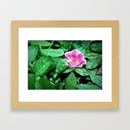 Pink Flower in the Rain 2 Framed Art Print