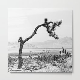 Crooked Cactus B&W // Desert Landscape Photograph Mojave Sierra Nevada Cacti Scenic View Metal Print