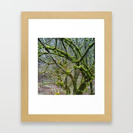 Lichen Framed Art Print
