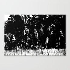 Black White Nature Canvas Print