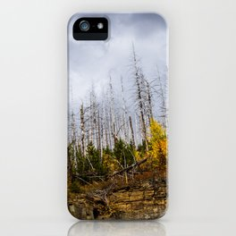 Bare Trees iPhone Case
