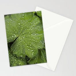 Water drops on fresh green Leaf Stationery Cards