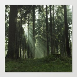 Forrest one Canvas Print
