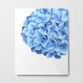 Hydrangea, Big blue flower Metal Print