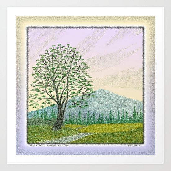 OREGON ASH TREE IN SPRINGTIME VINTAGE PENCIL COLOR DRAWING Art Print