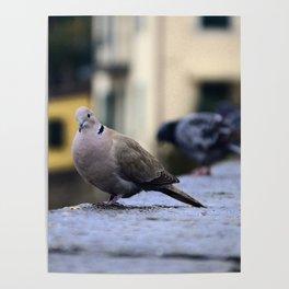My Italian Bird Friend Poster