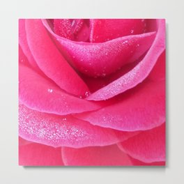 Dew on pink rose petals macro Metal Print