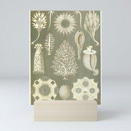 Naturalist Sponges Mini Art Print