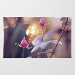 Rose Buds & Light of Gold / / Valentine's Day Card Rug