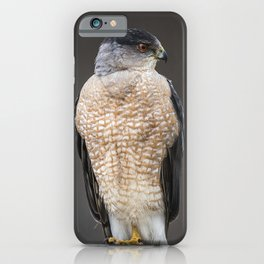 Red eyed Coopers Hawk iPhone Case