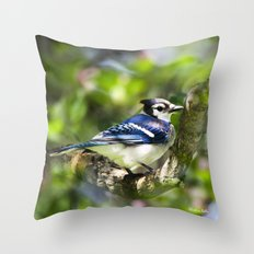 Spring Blue Jay Throw Pillow