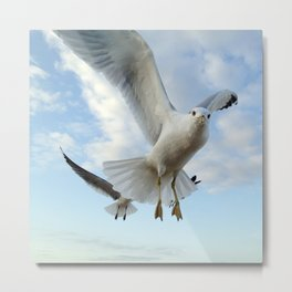 Gull Closeup Metal Print