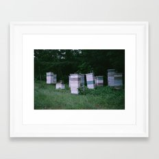 Bee Boxes Framed Art Print