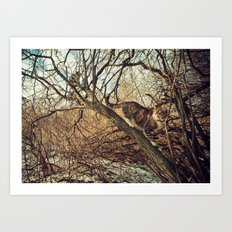 January cats Art Print