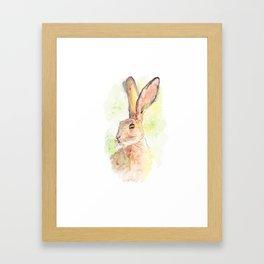 summer hare Framed Art Print