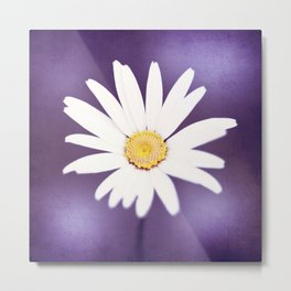 Purple Yellow Photography, Daisy Flower Art, Purple Violet Nature Photo Print Metal Print
