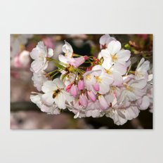Bee & Cherry Blossoms Canvas Print