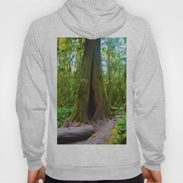 Cathedral Grove on Vancouver Island, BC Hoody
