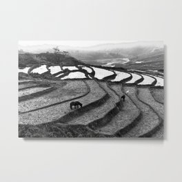 Wild Horses on the Rice Terraces of Northern Vietnam Metal Print