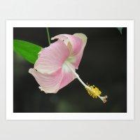 Lavender color hibiscus flower Art Print