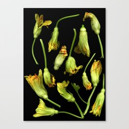 Squash Blossoms Canvas Print