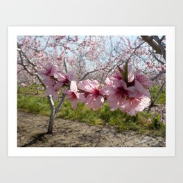 Branch of Blossoms Art Print