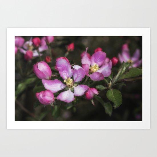 Pink Apple Blossoms Art Print
