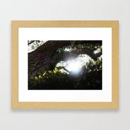 Sunlight Through The Oak 2 Framed Art Print