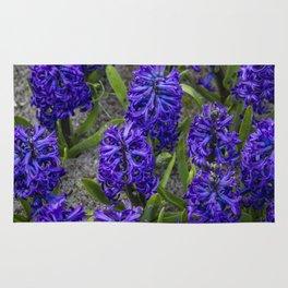 Close-up of Beautiful, Deep Purple Hyacinths in Amsterdam, Netherlands Rug