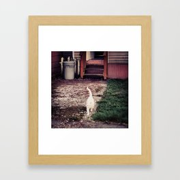 Baby White Framed Art Print