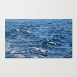 Underwater Dolphin Sees You Canvas Print