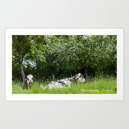 2 cows in Normandy France Art Print