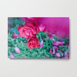 common roses Metal Print