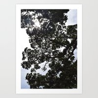 New Zealand Summer Art Print