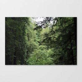 Transparent Forest Canvas Print