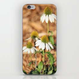 Last Of The Cone Flowers iPhone Skin