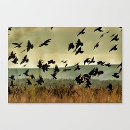 Birdsfly Canvas Print