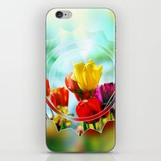 Tulips in the sunshine iPhone & iPod Skin