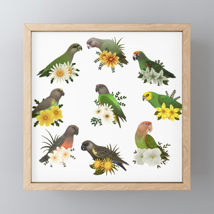 Poicephalus Parrots Framed Mini Art Print