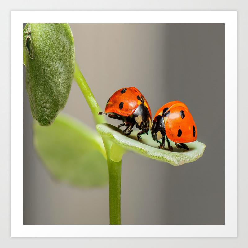 Kissing Ladybugs Art Print By Jnccreations Society6