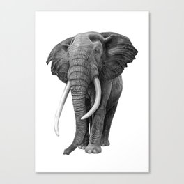 Bull elephant - Drawing in pencil Canvas Print