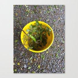 Gardening Bucket Canvas Print