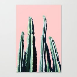 Green Cactus 9 in Pink Canvas Print